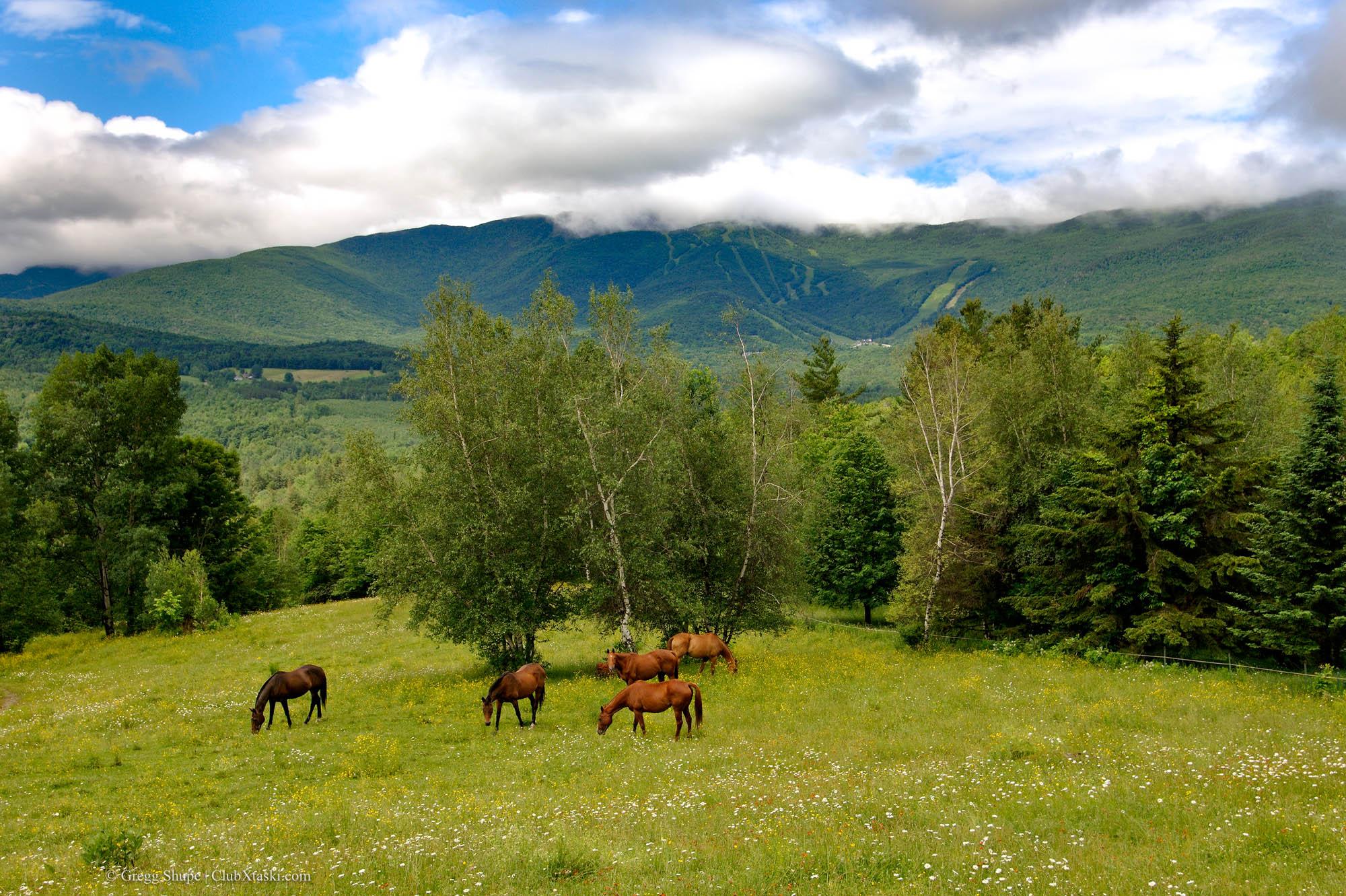 Horses in backyard